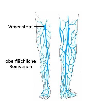 Die Venen und ihre Funktion | Gesundheits-Wiki